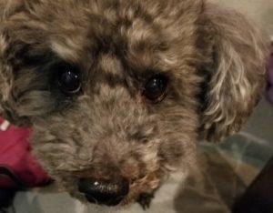 犬 に 噛ま れ たら 何 科 犬に噛まれた時の対処法は?注意したい感染症や応急処置、病院に行く...